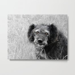 A smiling dog - stray homeless dog photo Metal Print