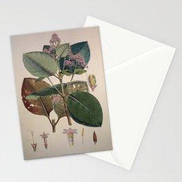 Illustration of the Nueva Quinologia of Pavon Stationery Cards