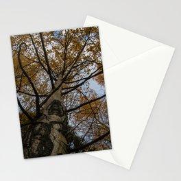 Colorado Aspen Stationery Cards