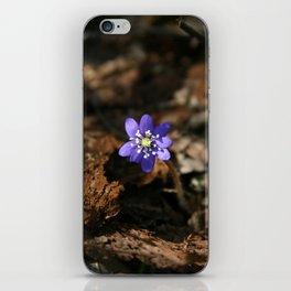 Hepatica nobilis in the humus iPhone Skin