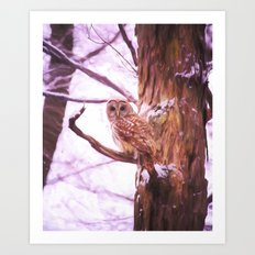Painted Barred Owl Art Print