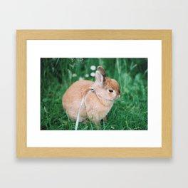 SSG Framed Art Print