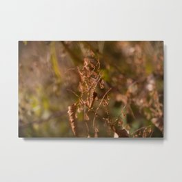 HOME: EARLY OCTOBER, WEEDS Metal Print