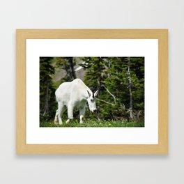 My Friend The Mountain Goat Framed Art Print