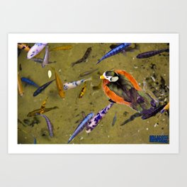 Duck With Coy Art Print