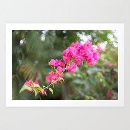 Flower Dream 1 Art Print