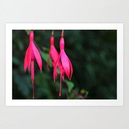 Pink Petals 1 Art Print