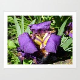 Flower pic 7 Art Print