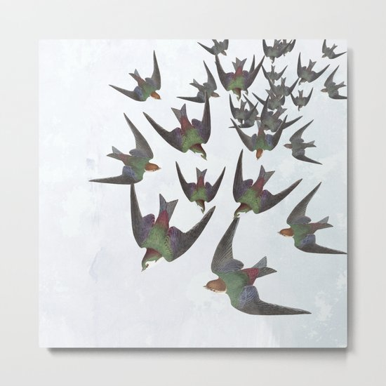 Dipping and dancing barn swallows Metal Print