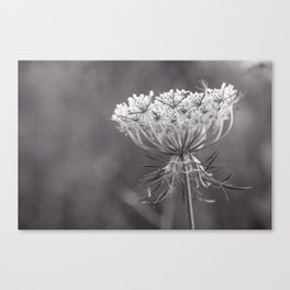 Queen of the Wildflowers Canvas Print