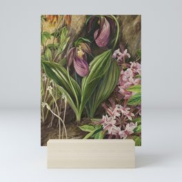 New England Lady Slipper Wild Orchids still life painting Mini Art Print