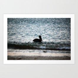 Galapagos Pelican Art Print