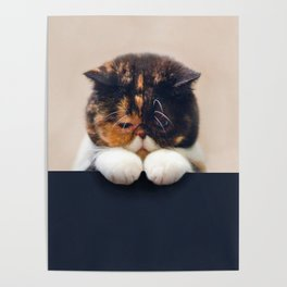 Desperate Cat Poster