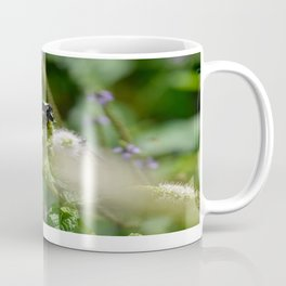 Extra Extra!! Scolia dubia a.k.a The Blue Winged Wasp Returns With Back up! Coffee Mug