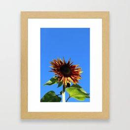 Sunflower, Hansville, WA Framed Art Print