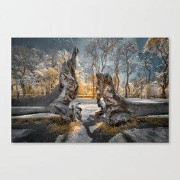 Cracked Tree Canvas Print