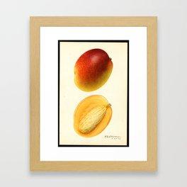 Mango - Hayden Framed Art Print