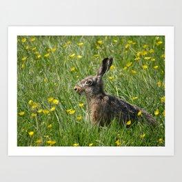 Brown Hare among buttercups | The Netherlands | Dutch landscape | Fina art nature photography Art Print
