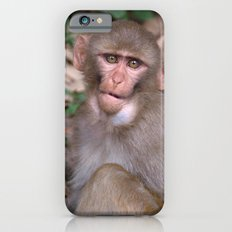 Young Rhesus Macaque with Food in Cheeks iPhone 6s Slim Case