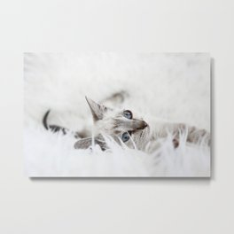 Little sweet cat Metal Print