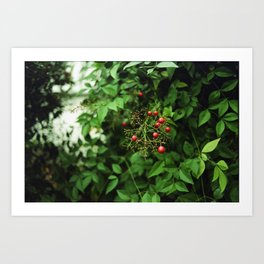 Poison Fruit Art Print