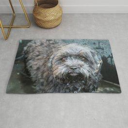 puppy bath Rug