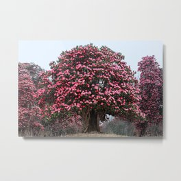 Rhododendron tree Metal Print