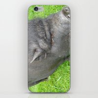 pigs iPhone & iPod Skins featuring Pigs by jls364