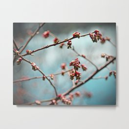 Pink Spring Buds on Blue Metal Print