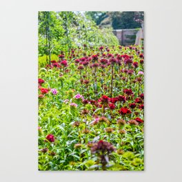 The Lost Gardens of Heligan - Sweet Williams in The Walled garden Canvas Print