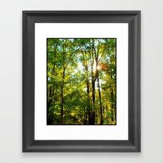 Fall Trees Framed Art Print