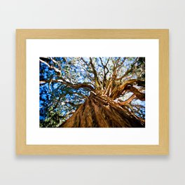 Looking Up A Tree Framed Art Print