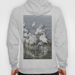 Les Oies Blanches : Kécéça ? - The White Geese : What's this? Hoody