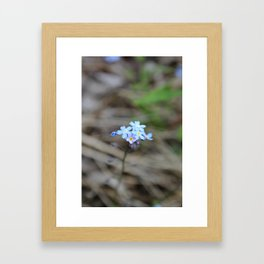 Many Forget-Me-Nots Framed Art Print