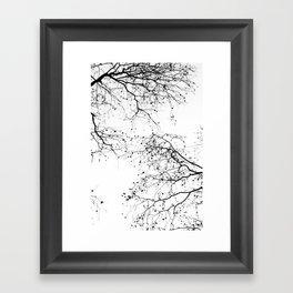 BLACK BRANCHES 2 Framed Art Print