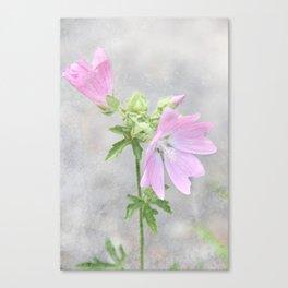 Pink Mallow Canvas Print