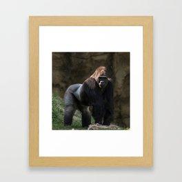 Gorilla Chief Framed Art Print