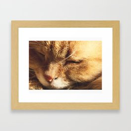 Cat Serenity  Framed Art Print
