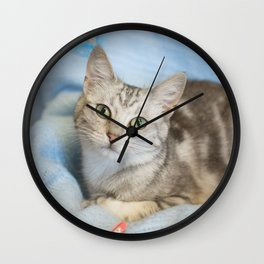 Grey kitten with butterflies Wall Clock