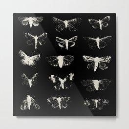 moths Metal Print