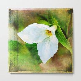 Flower . Bloom . Beauty ~ Ginkelmier Inspired Metal Print