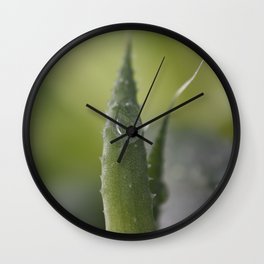 The drop and the cactus leaf..... Wall Clock