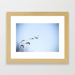 Ducks in Flight Framed Art Print