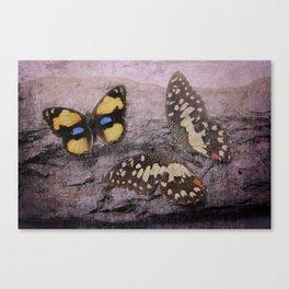 Butterflies Vintage Canvas Print