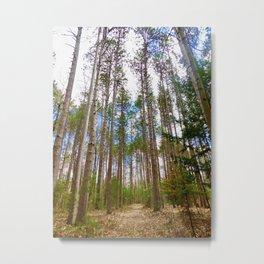Sunken Lake Tall Pines Metal Print