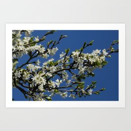 beautiful spring -3- Art Print
