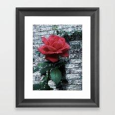 Rain and Rose Framed Art Print
