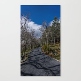 Tree Shadow Canvas Print