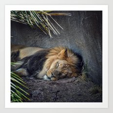 The Lion Sleeps Tonight Art Print