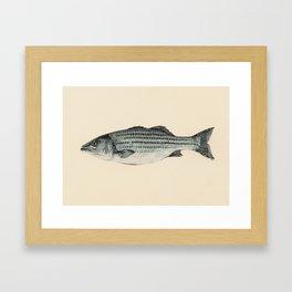 A Fish Framed Art Print
